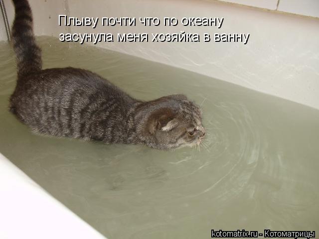 Котоматрица: Плыву почти что по океану засунула меня хозяйка в ванну