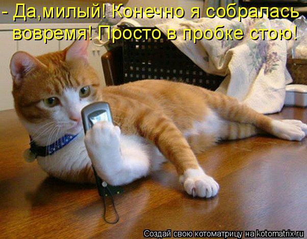 Котоматрица: - Да,милый! Конечно я собралась  вовремя! Просто в пробке стою!
