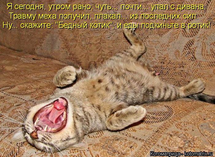"""Котоматрица: Я сегодня, утром рано, чуть... почти... упал с дивана.  Травму меха получил, плакал... из последних сил.  Ну... скажите: """"Бедный котик"""", и еды подкинь"""