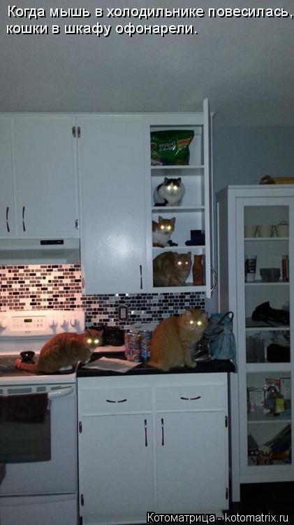 Котоматрица: Когда мышь в холодильнике повесилась, кошки в шкафу офонарели.