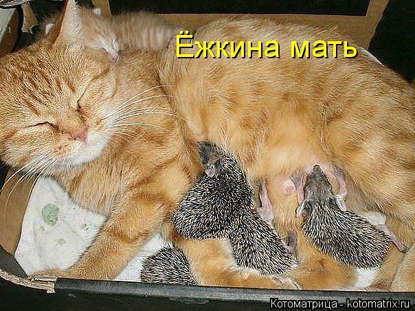 Котоматрица: Ёжкина мать