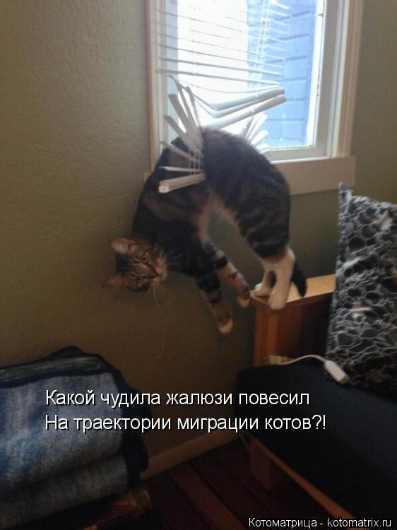 Котоматрица: Какой чудила жалюзи повесил На траектории миграции котов?!