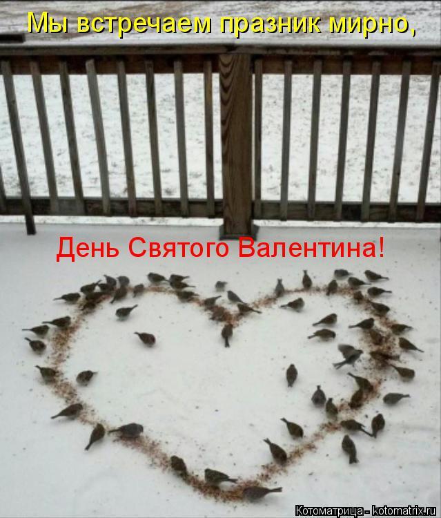Котоматрица: День Святого Валентина! Мы встречаем празник мирно,