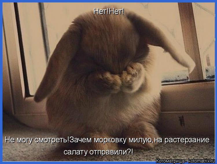Котоматрица: Нет!Нет! Не могу смотреть!Зачем морковку милую,на растерзание  салату отправили?!