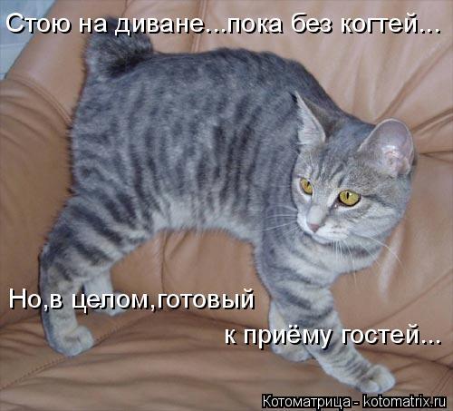 Котоматрица: Стою на диване...пока без когтей... Но,в целом,готовый к приёму гостей...