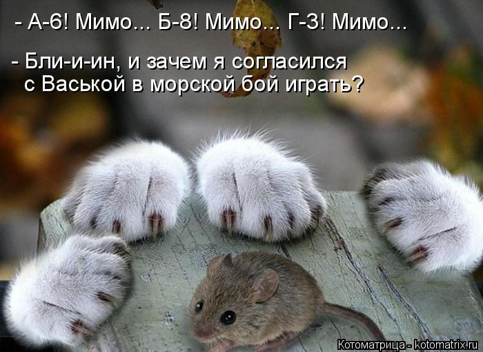 Котоматрица: - А-6! Мимо... Б-8! Мимо... Г-3! Мимо... - Бли-и-ин, и зачем я согласился  с Васькой в морской бой играть?