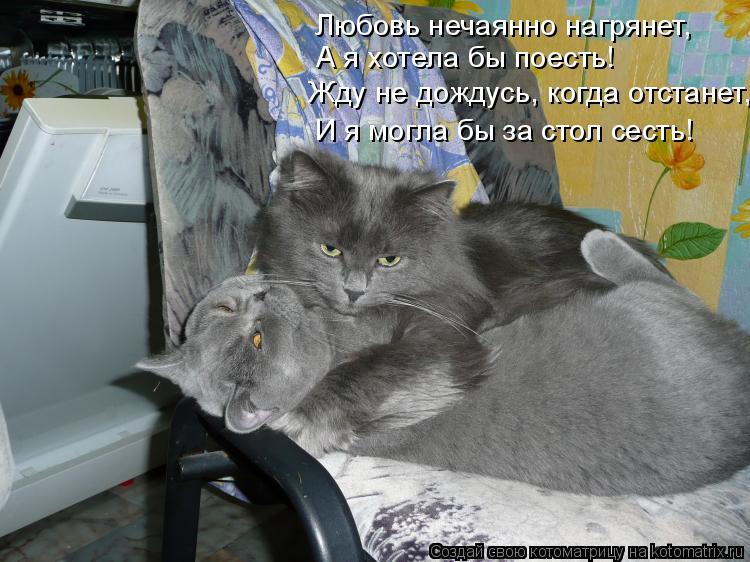 Котоматрица: А я хотела бы поесть! Любовь нечаянно нагрянет, Жду не дождусь, когда отстанет, И я могла бы за стол сесть!