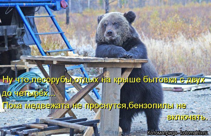 Котоматрица: Ну что,лесорубы,отдых на крыше бытовки с двух до четырёх... Пока медвежата не проснутся,бензопилы не  включать.