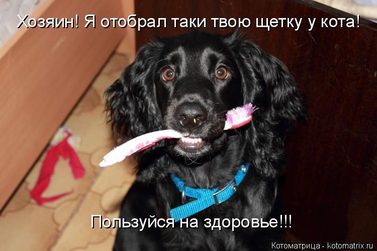 Котоматрица: Хозяин! Я отобрал таки твою щетку у кота! Пользуйся на здоровье!!!! Хозяин! Я отобрал таки твою щетку у кота!  Пользуйся на здоровье!!!