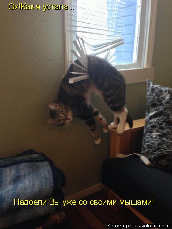 Котоматрица: Ох!Как я устала... Надоели Вы уже со своими мышами!