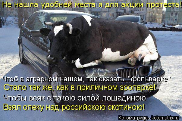 """Котоматрица: Не нашла удобней места я для акции протеста! Чтоб в аграрном нашем, так сказать, """"фольварке"""" Чтобы всяк с такою силой лошадиною Взял опеку на"""