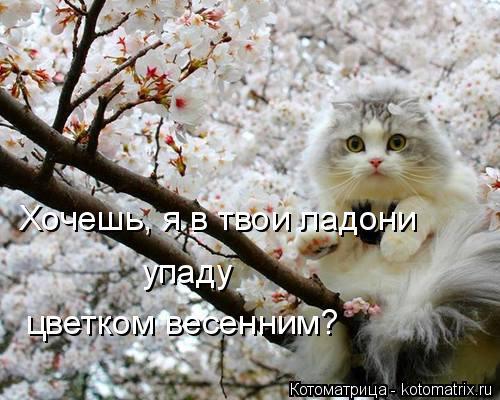 Котоматрица: Хочешь, я в твои ладони упаду цветком весенним?