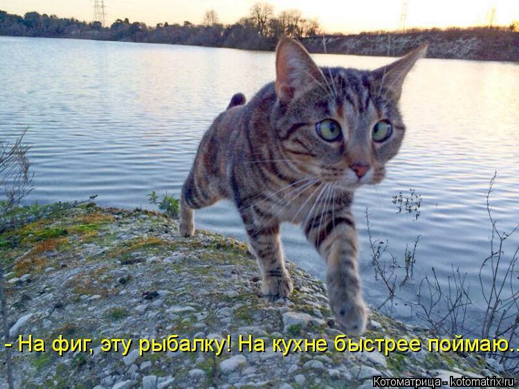 Котоматрица: - На фиг, эту рыбалку! На кухне быстрее поймаю...