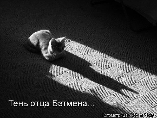 Котоматрица: Тень отца Бэтмена...