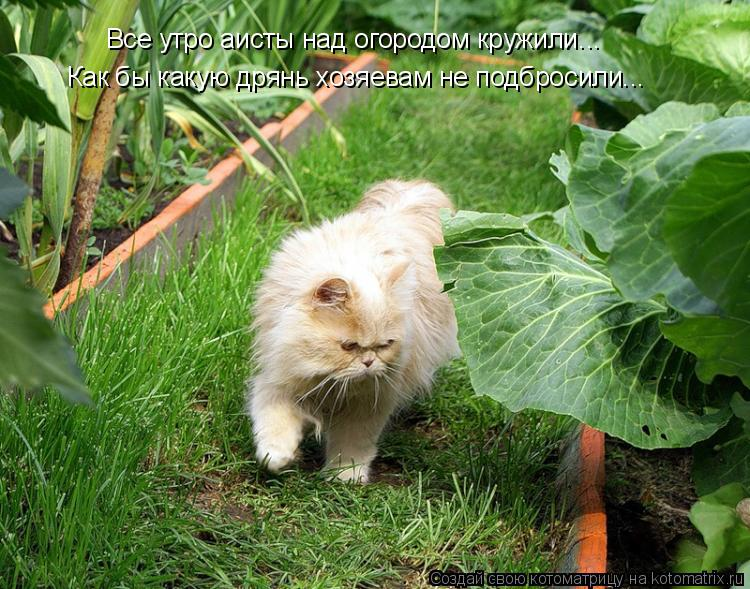 Котоматрица: Все утро аисты над огородом кружили... Как бы какую дрянь хозяевам не подбросили...