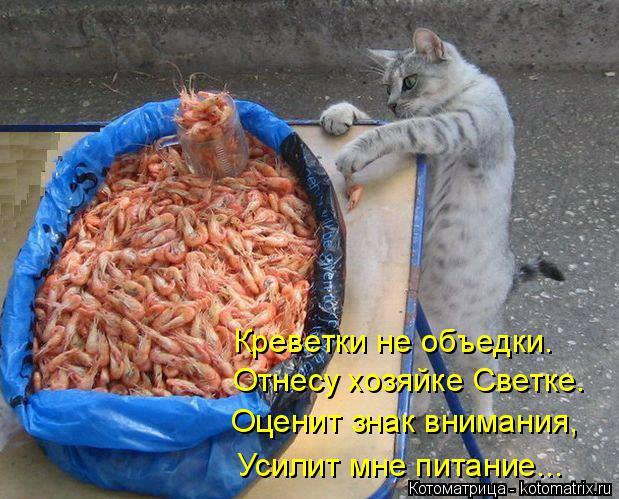 Котоматрица: Креветки не объедки. Отнесу хозяйке Светке. Оценит знак внимания, Усилит мне питание...