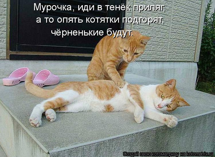 http://kotomatrix.ru/images/lolz/2014/02/18/kotomatritsa_vf.jpg