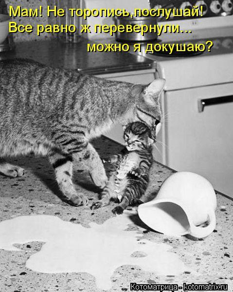 Котоматрица: Мам! Не торопись,послушай! Все равно ж перевернули... можно я докушаю?