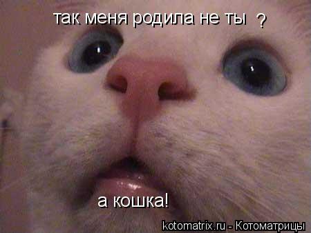 Котоматрица: так меня родила не ты  ? а кошка!