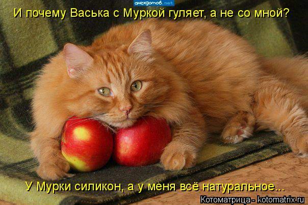Котоматрица: И почему Васька с Муркой гуляет, а не со мной? У Мурки силикон, а у меня всё натуральное...