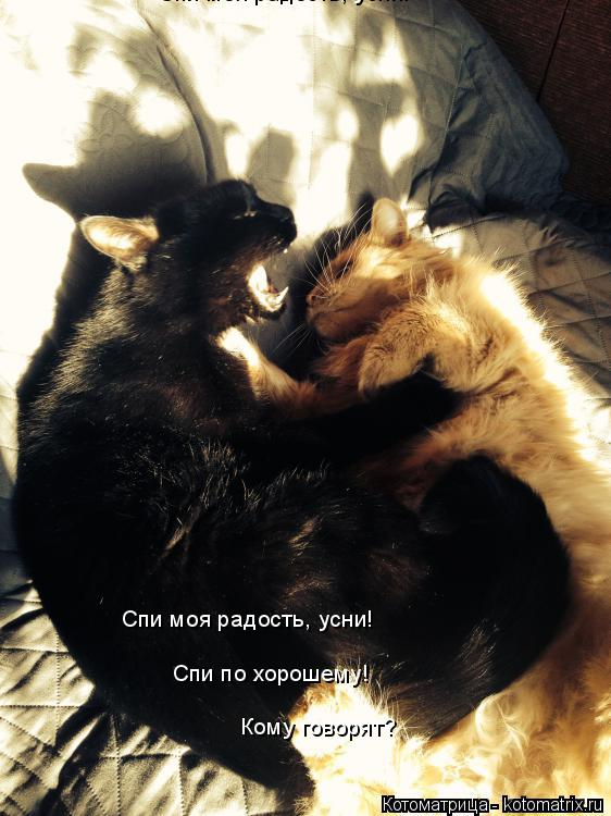 Котоматрица: Спи моя радость, усни! Спи моя радость, усни! Спи по хорошему! Кому говорят?