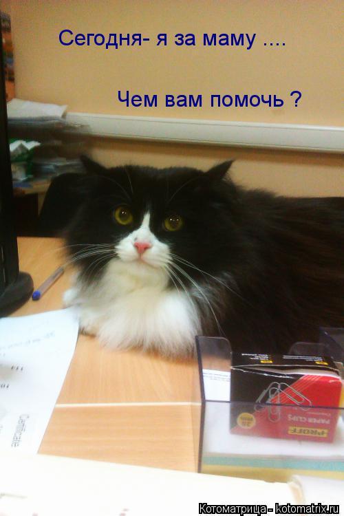 Котоматрица: Сегодня- я за маму .... Чем вам помочь ?