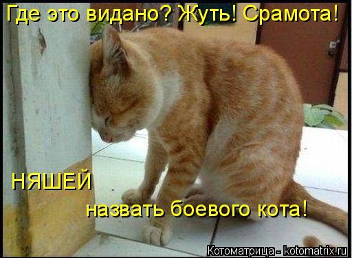 Котоматрица: Где это видано? Жуть! Срамота! НЯШЕЙ  назвать боевого кота!