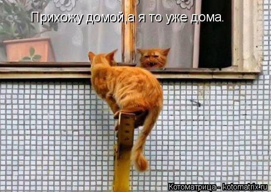 Котоматрица: Прихожу домой,а я то уже дома.