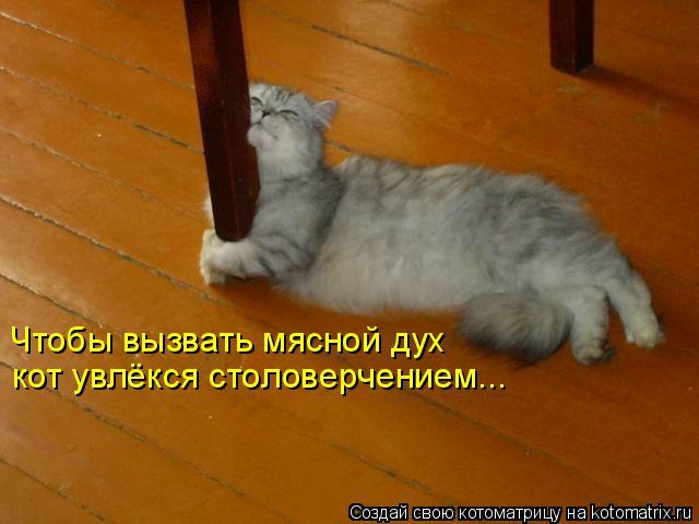Котоматрица: Чтобы вызвать мясной дух  кот увлёкся столоверчением...