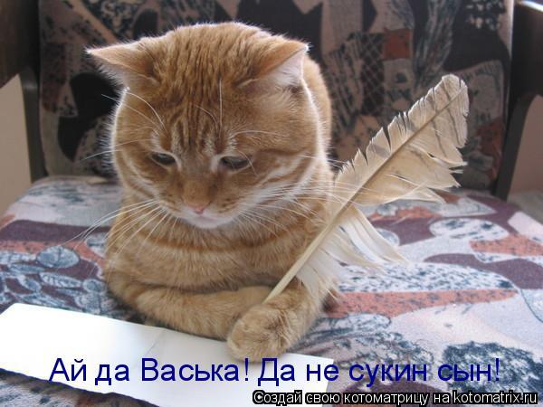 Котоматрица: Ай да Васька! Да не сукин сын!