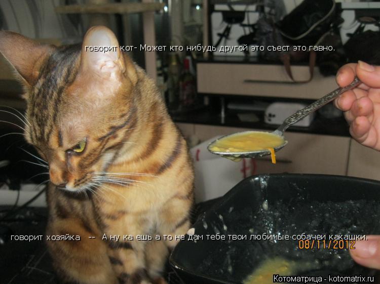Котоматрица: Может кто нибудь другой это съест это гавно.  А ну ка ешь а то не дам тебе твои любимые собачеи какашки.  говорит хозяйка   -- говорит кот-