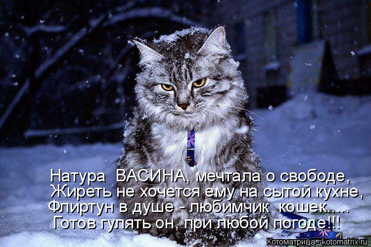 Котоматрица: Натура  ВАСИНА, мечтала о свободе,  Жиреть не хочется ему на сытой кухне, Флиртун в душе - любимчик  кошек.....  Готов гулять он, при любой погоде