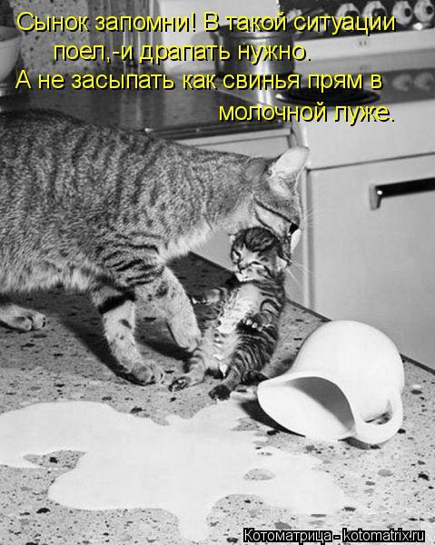 Котоматрица: Сынок запомни! В такой ситуации поел,-и драпать нужно. А не засыпать как свинья прям в молочной луже.