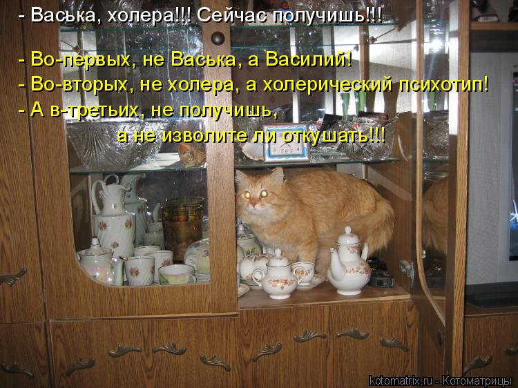 Котоматрица: - Васька, холера!!! Сейчас получишь!!! - Во-первых, не Васька, а Василий! - Во-вторых, не холера, а холерический психотип! - А в-третьих, не получишь