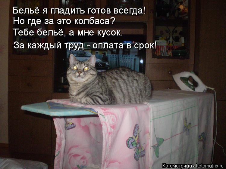 Котоматрица: Бельё я гладить готов всегда!  Но где за это колбаса? Тебе бельё, а мне кусок. За каждый труд - оплата в срок!