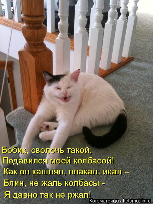 Котоматрица: Бобик, сволочь такой, Подавился моей колбасой! Как он кашлял, плакал, икал –  Блин, не жаль колбасы -  Я давно так не ржал!