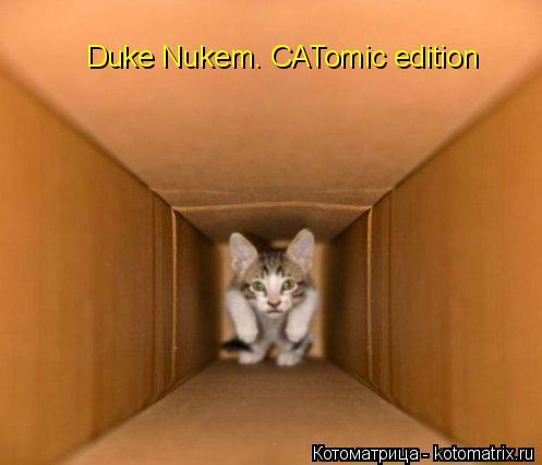 Котоматрица: Duke Nukem. CATomic edition