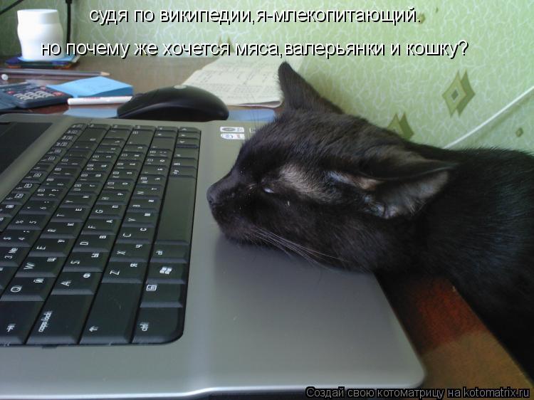 Котоматрица: судя по википедии,я-млекопитающий. но почему же хочется мяса,валерьянки и кошку?