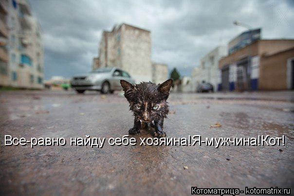 Котоматрица: Все-равно найду себе хозяина!Я-мужчина!Кот!