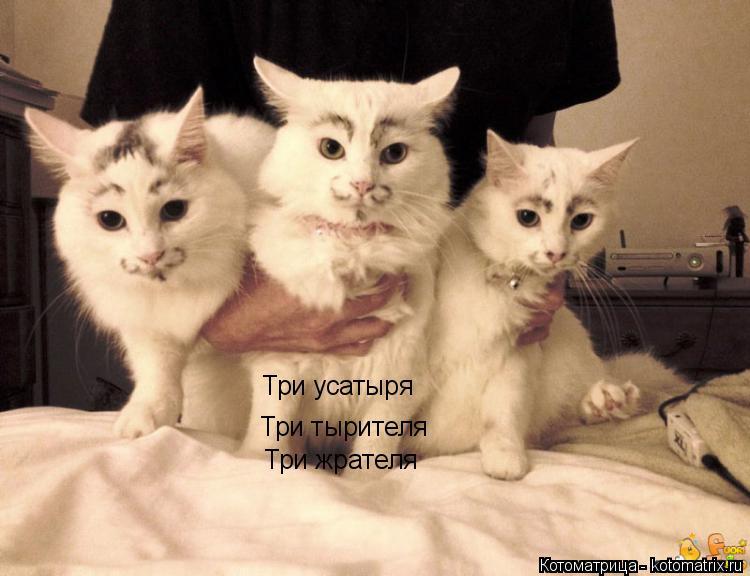 Котоматрица: Три усатыря Три тырителя Три жрателя