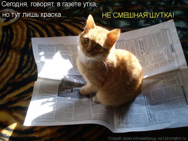 Котоматрица: Сегодня, говорят, в газете утка, но тут лишь краска... НЕ СМЕШНАЯ ШУТКА!