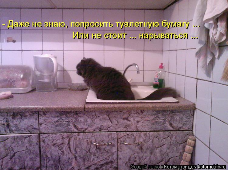 Котоматрица: - Даже не знаю, попросить туалетную бумагу ... Или не стоит ... нарываться ...
