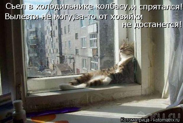Котоматрица: Съел в холодильнике колбасу, и спрятался! Вылезти не могу,за-то от хозяйки  не достанется!