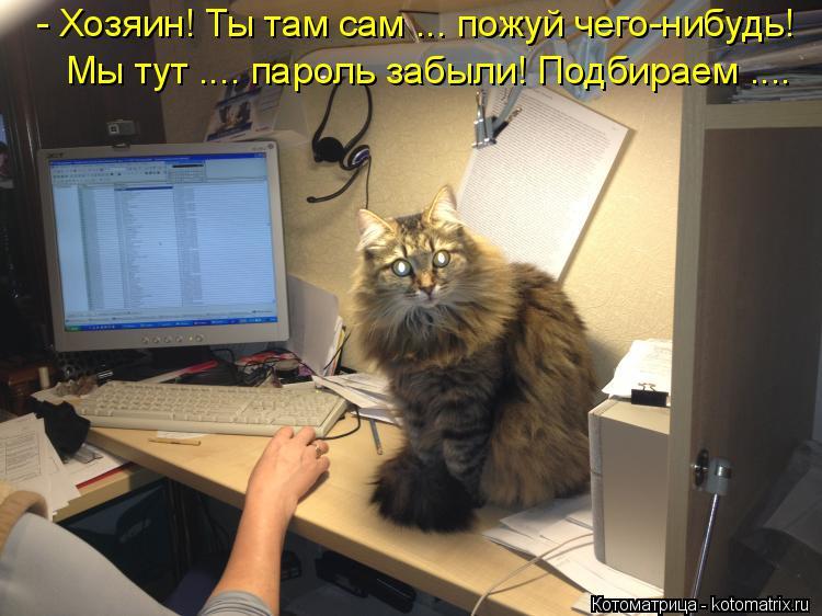 Котоматрица: - Хозяин! Ты там сам ... пожуй чего-нибудь! Мы тут .... пароль забыли! Подбираем ....