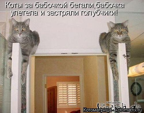 Котоматрица: Коты за бабочкой бегали,бабочка  улетела и застряли голубчики!