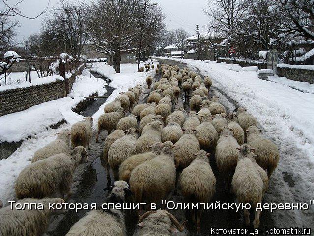 """Котоматрица: Толпа которая спешит в """"Олимпийскую деревню"""""""