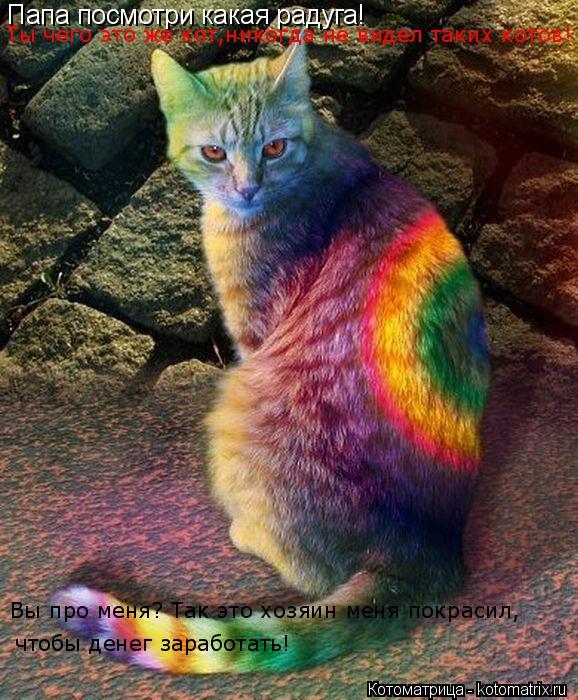 Котоматрица: Папа посмотри какая радуга! Ты чего это же кот,никогда не видел таких котов! Вы про меня? Так это хозяин меня покрасил,  чтобы денег заработат