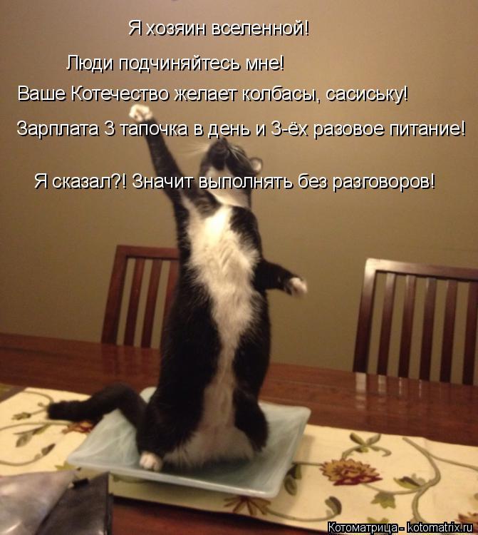 Котоматрица: Я хозяин вселенной!  Люди подчиняйтесь мне! Ваше Котечество желает колбасы, сасиську! Зарплата 3 тапочка в день и 3-ёх разовое питание! Я сказ