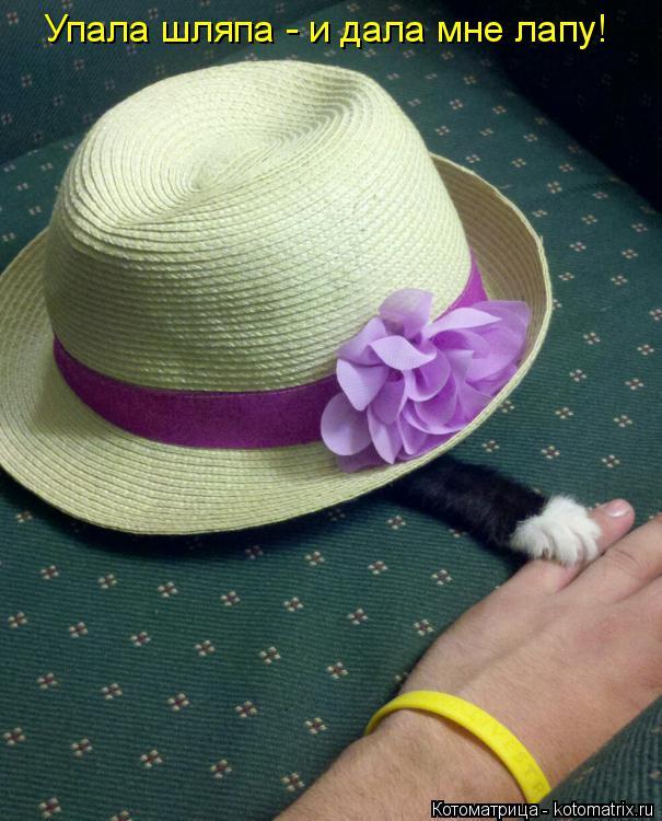 Котоматрица: Упала шляпа - и дала мне лапу!