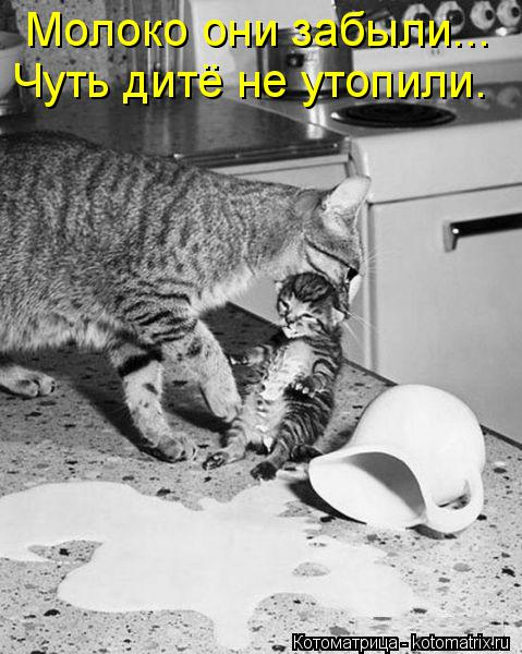 Котоматрица: Молоко они забыли... Чуть дитё не утопили.